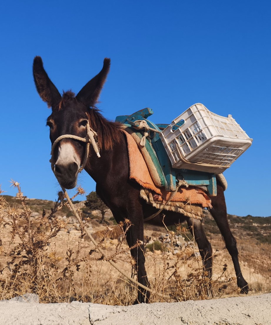donkey lovely life in cyclades